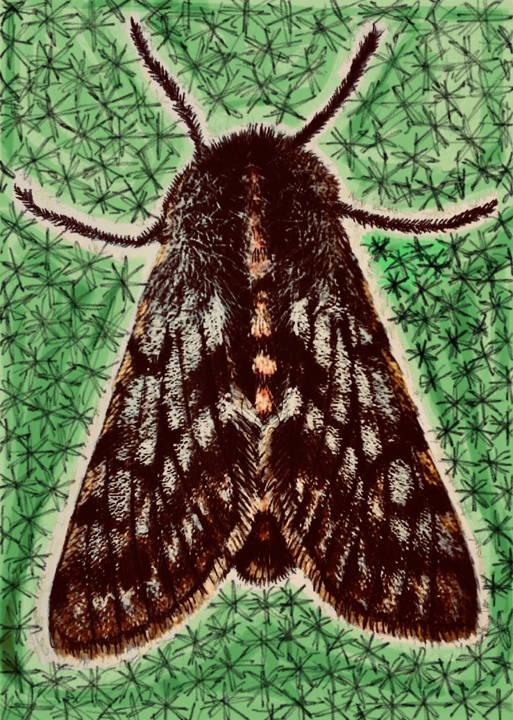P.220 Supernatural Moor